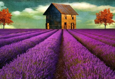 House on lavender field - pretty, house, lovely, cottage, scent, beautiful, cabin, lavender, trees, fragrance, sky, nice, painting, summer, rows, field