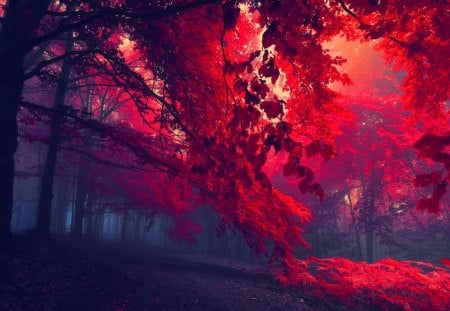 Dark red forest - autumn, nice, dark, magic, path, trees, nature, fall, mystic, forest, beautiful, lovely, enchanted, dusk, mist, leaves