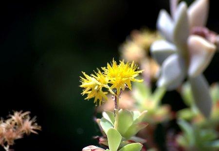 Fiori Gialli Montagna.I Fiori Di Brosso Flowers Nature Background Wallpapers On