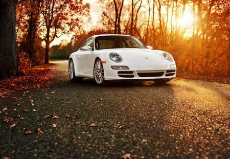 Porsche 911 in the autumn forest - autumn, forest, porsche, 911