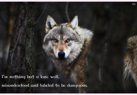 Wolf Wisdom Dogs Animals Background Wallpapers On Desktop Nexus