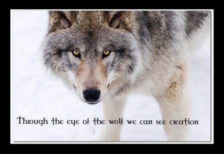 wolf wisdom - Dogs & Animals Background Wallpapers on ...