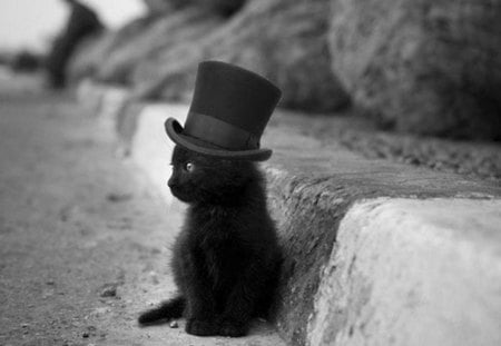 mad hatter kitty - photography, black, fun, cat, sweet, hat