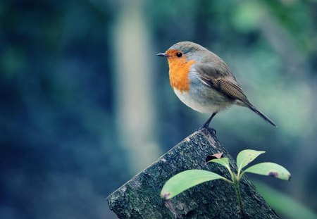 Beautiful Birds - birds, forest, wood, animal