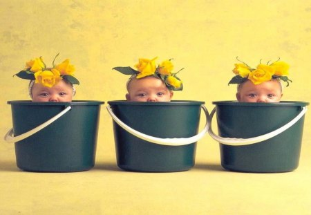 Babies times three - cute, buckets, flowers, yellow, babies