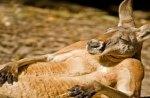 Kangaroo Jack Chilling