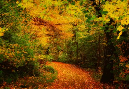 Amazing Forest Way - forest, autumn, grass, colors, ground, trees, leaves, daylight, path, day, nature