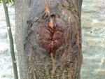 Face of Tree