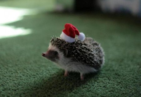 christmas animals - cute, other, animals, christmas