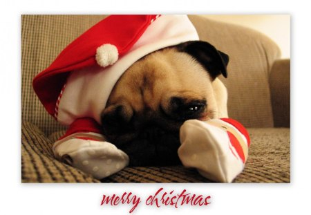 Merry Christmas Puppies.Merry Christmas Dogs Animals Background Wallpapers On