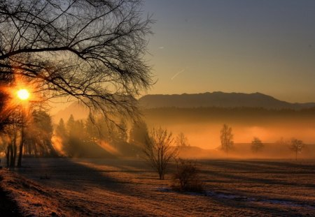 Misty Morning - image, foggy, sun, grass, magic, clouds, fog, nice, wallpaper, mounts, beauty, sunrise, morning, widescreen, dawn, smoky, sky, trees, cool, mountains, awesome, photoshop, landscape, field, scenic, sunny, beautiful, trunks, cold, picture, grasslands, photography, leaves, sunsets, hot, smoke, scenery, photo, amazing, view, plantation, leaf, magical, misty, branches, meadow, scene