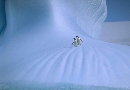 THE GREAT BLUE YONDER - antartica, snowscape, snow, emperor penguins, birds, wildlife, ice, penguins