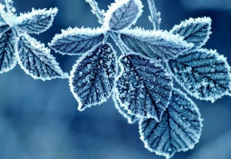 CRYSTAL BLUE ICE - leaves, snow, icicles, seasons, trees, winter, frost