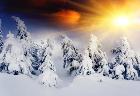 Winter Sun - hills, magic winter, winter sun, sunlight, peaceful, winter time, tree, magic, sun, amazing, winter, snowflakes, landscape, hill, sunrise, sunset, sky, splendor, mountains, winter sunset, sunrays, nature, trees, beauty, beautiful, lovely, snow, winter splendor, rays, clouds, snowy, view