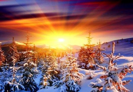 Winter sunrise winter nature background wallpapers on desktop