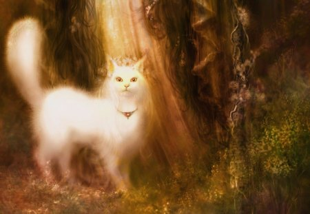 Magic Cat Fantasy Amp Abstract Background Wallpapers On