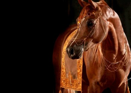 Show horse - Horses & Animals Background Wallpapers on