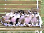 Puppies on a bench