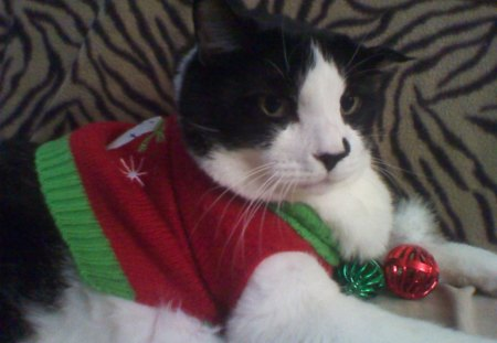 My Christmas Kitty - holidays, pets, cats, animals
