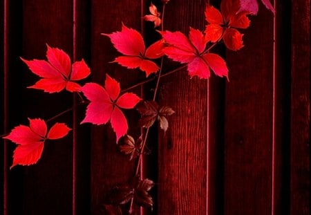 decorating in red - beautifully, red, leaves, wood
