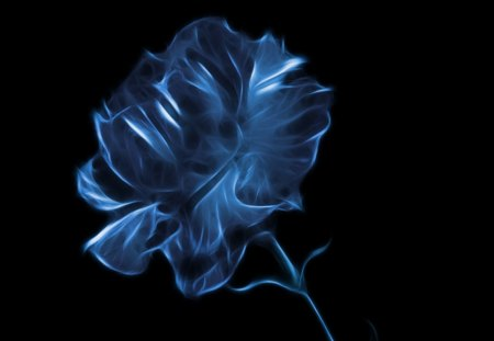 Blue Rose - 3D and CG & Abstract Background Wallpapers on