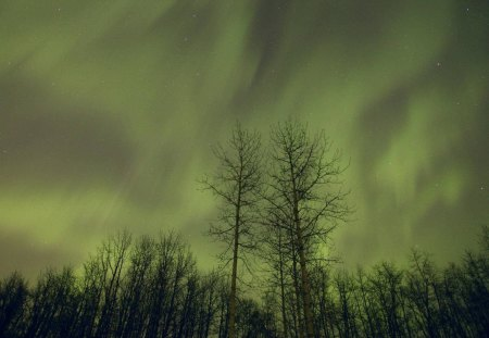northern lights in alberta canada - forest, stars, winter, northern lights