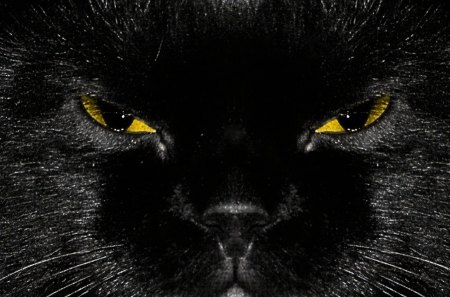 Yellow Eyed Black Cat 3d And Cg Abstract Background Wallpapers On Desktop Nexus Image 1256640