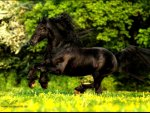 friesian horse running