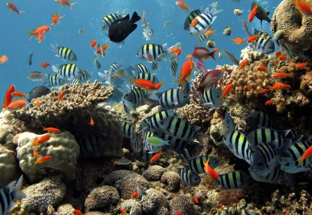 Colorful underwater fish oceans nature background wallpapers on colorful underwater fish oceans nature background wallpapers on desktop nexus image 1257360 freerunsca Gallery
