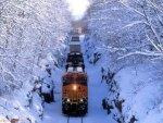 """  Train  """