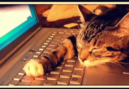 All Work & No Play... - sleep, snooze, laptop, kitty, nap, kitten, catnap, dell, cute, computer, cat