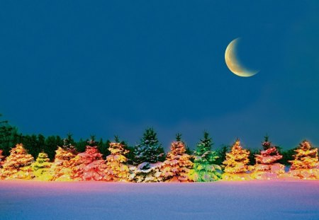 Outdoor Christmas Trees Winter Nature Background