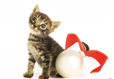 christmas and new year smart kitten