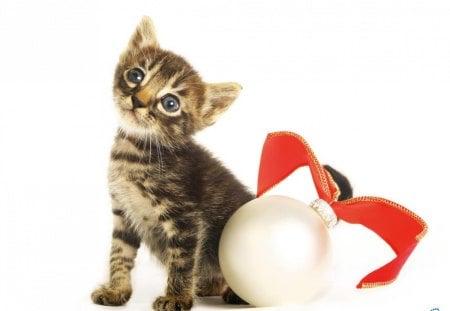 christmas and new year smart kitten