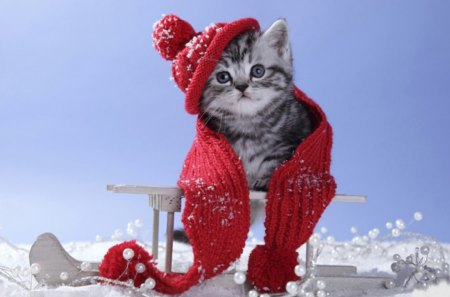 I don't like cold! - snow, scarf, cat, re, sledge, cold, hat