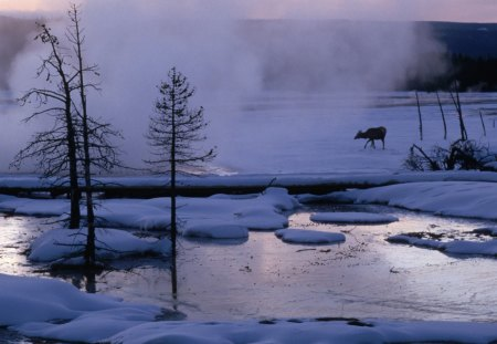 yellowstone in the middle of winter - moose, steam, trees, lake, winter