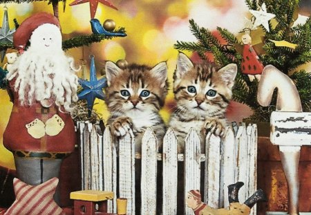 Two maine coon kittens - fence, maine coon, kittens, toys, star