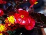 I fiori di Brosso