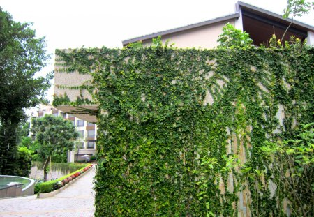 Fertilife - vines, fertilife, hot spring hotel, fpowers