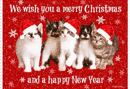 Image result for merry christmas cat