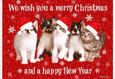 happy christmas cat