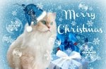♥     .*.*.*.Christmas Kitty.*.*.*.     ♥