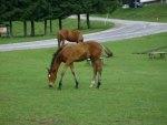 horse in bulgaria