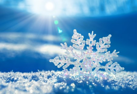 To acquire Snowflakes Winter pictures pictures trends