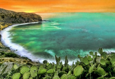 cactus above a beautiful seashore hdr - horizon, cactus, orange, sea, shore