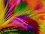 Rainbow of feathers