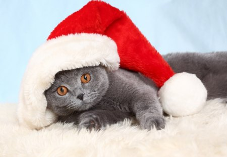 Christmas Cat - pretty, holidays, christmas cat, beautiful, adorable, magic, cat eyes, xmas, sweet, photography, magic christmas, beauty, happy holidays, animals, lovely, holiday, christmas, kitty, new year, happy new year, cat, cat face, hat, cute, paws, merry christmas, sweetness, eyes, cats, kitten