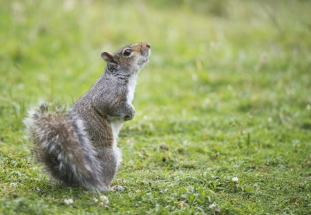 Cute funny squirrel squirrels animals background - Funny squirrel backgrounds ...