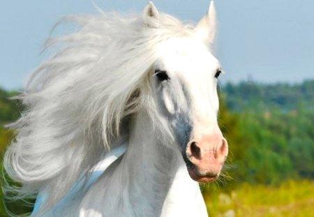 Beautiful Running White Horse Wallpapers Beautiful Running White Horse