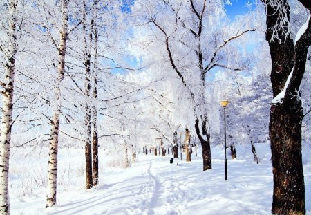 snow trees - cold, snow, winter, trees, white